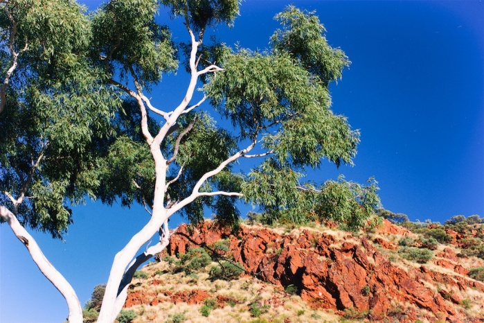 Ghost gum and red rock - RIC