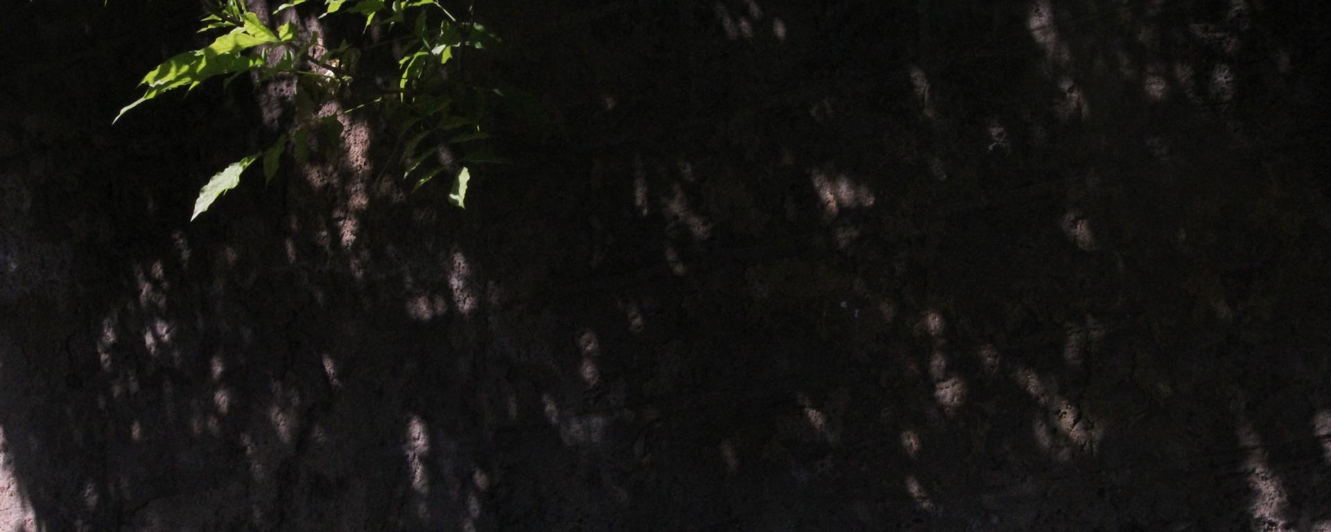 The Gardenia / Saudha Kasim – RIC Journal